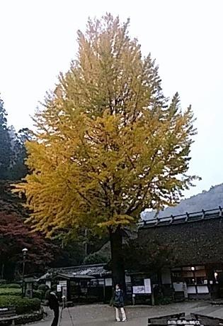 2017asuke-5.jpg